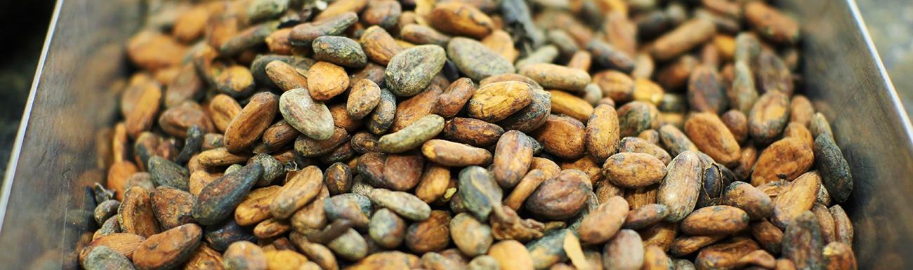 Lubrificanti Industria Cacao