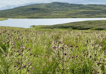 Agrofarmaci e fitosanitari