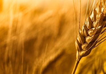 Lubrificanti Industria Alimentare
